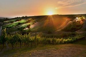 Západ nad vinohrady