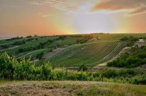 Pohled na vinohrady