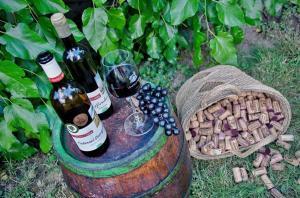 Zátiší vinařského dvora